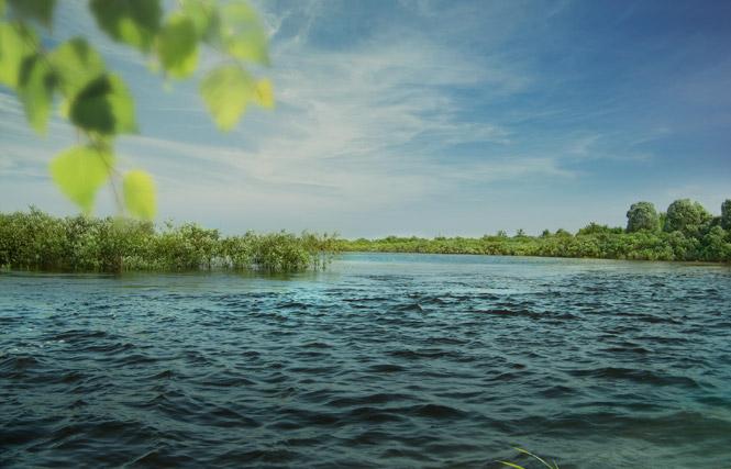 Разработка сайта для НПЦ НАН Беларуси по биоресурсам